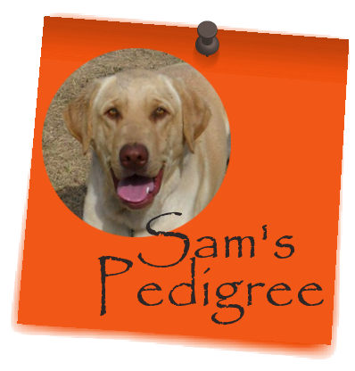 Sam's_Pedigree_postit